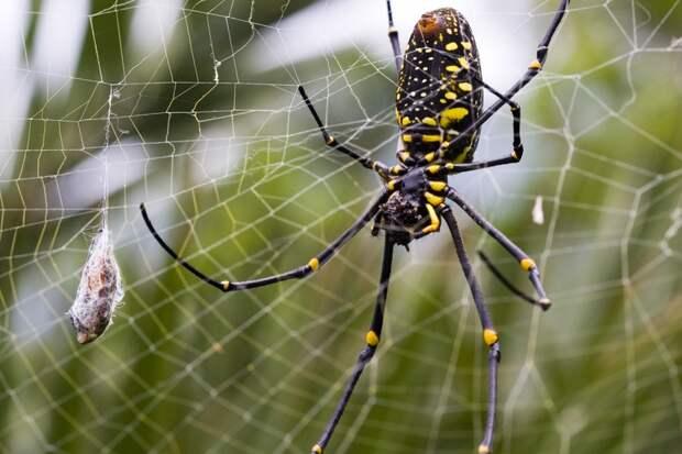 Почему пауки не застревают в собственной паутине