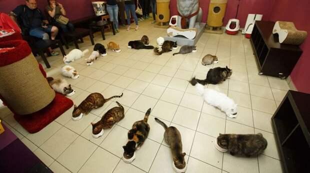 Коты Эрмитажа отметили профессиональный праздник