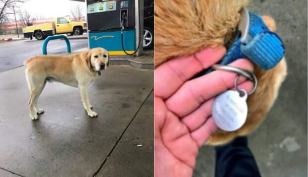 Парень хотел помочь бродячей собаке… Но странный медальон на её шее круто развернул все события! :)