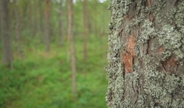 Пропавший влесу три дня назад глава Минздрава Омской области найден живым