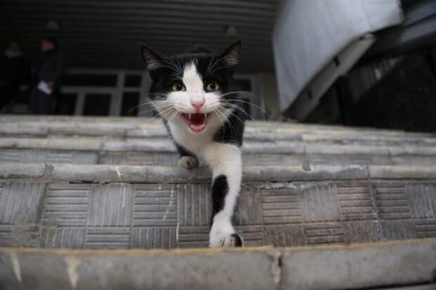 На выгульной площадке в сквере на Седова бесплатно привьют домашних питомцев от бешенства