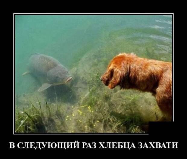 Демотиватор про собаку и карпа