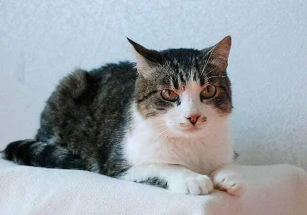 Кота-подростка выставили на улицу. Он сидел у мясного магазина, не зная, куда ему идти…