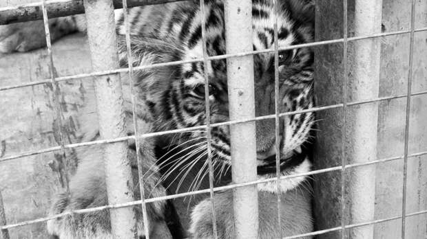 Зоолунапарк вРостовской области немогут выгнать изгорода