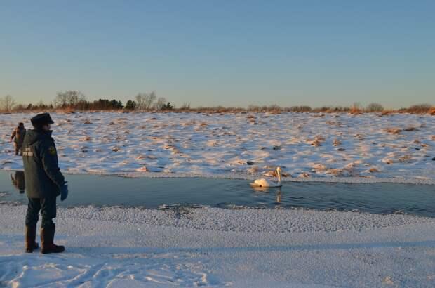 Замерзающего в 20-градусный мороз лебедя спасли из полыньи под Тобольском