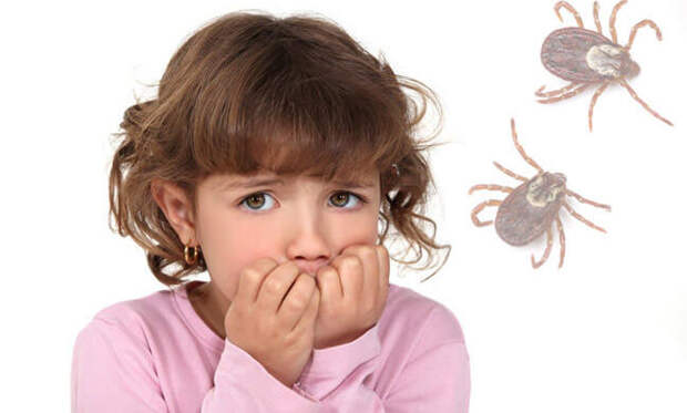 Как защитить ребёнка от клещей на дачном участке
