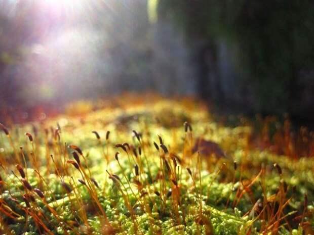 мох на солнце