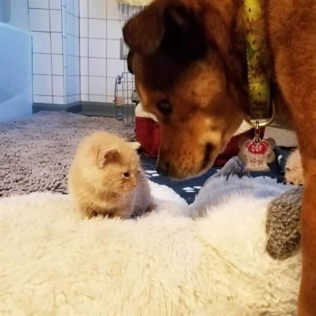 Брошенные котята нашли приемного отца, но это не кот