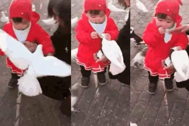 Покормили птичек: девочка отобрала уголубя хлеб, чтобы съесть его самой
