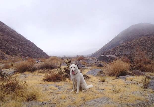 путешествие по США Джона Шторца и его собаки Вольфа (7)