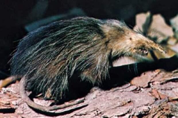 10 видов животных, заново найденных в этом столетии