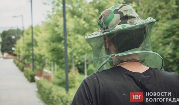 «На улицу не выйти»: мошкара лютует по всей Волгоградской области