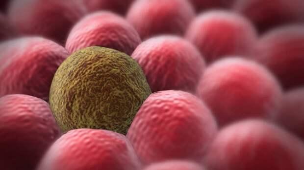 Ученые нашли механизм борьбы со стареющими клетками