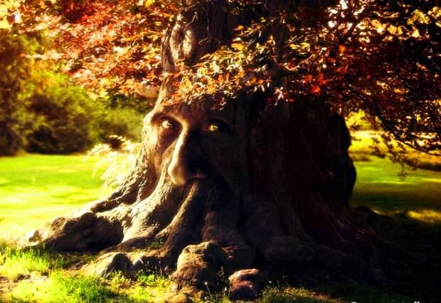 Живые души деревьев - удивительные факты
