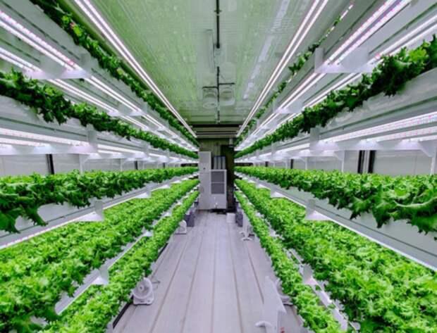 Еда будущего: пять перспективных стартапов в области устойчивого питания