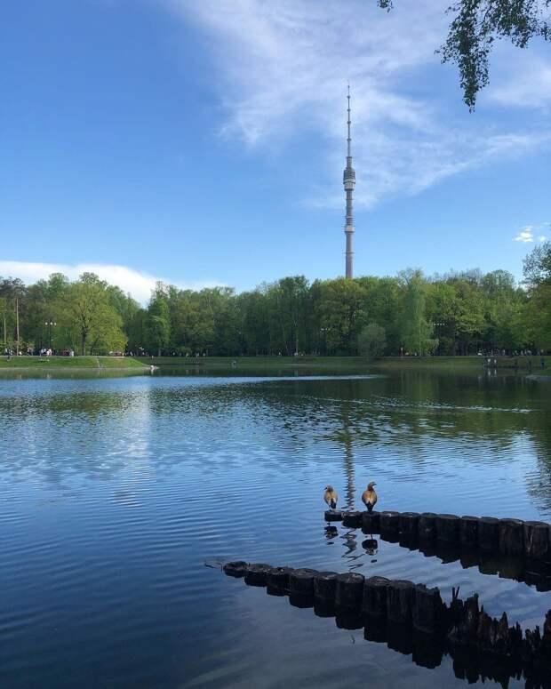 Фото дня: утиное свидание в Останкинском парке