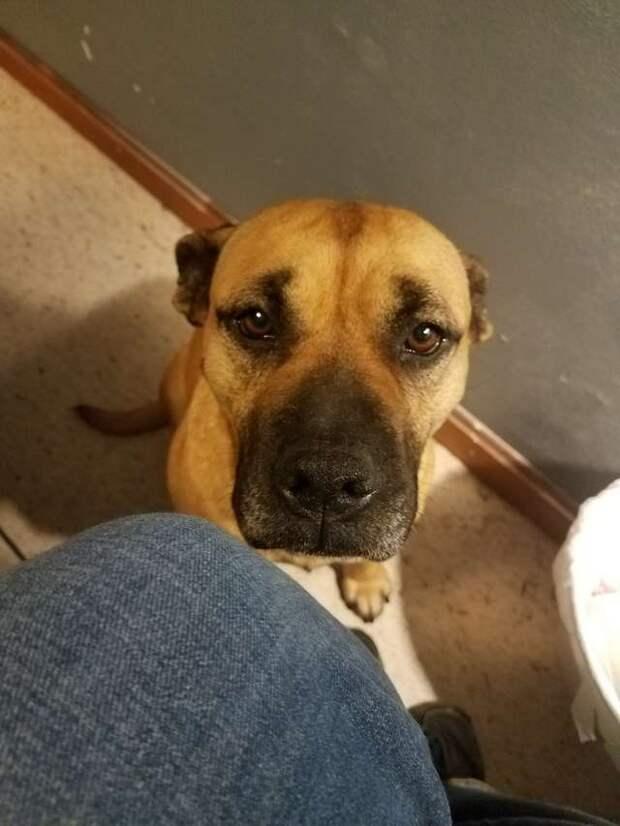 От отчаяния уличная собака запрыгнула в открытую дверь машины  история, история спасения, помощь животным, собака, собаки, спасение животных