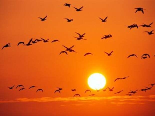 orange-birds-rosing