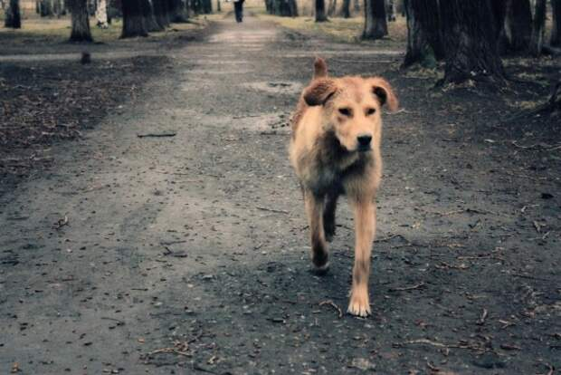 Стерилизованных бродячих собак Севастополя отправляют на передержку