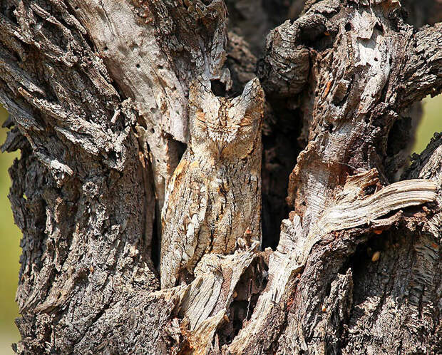 owl-camouflage-disguise-26