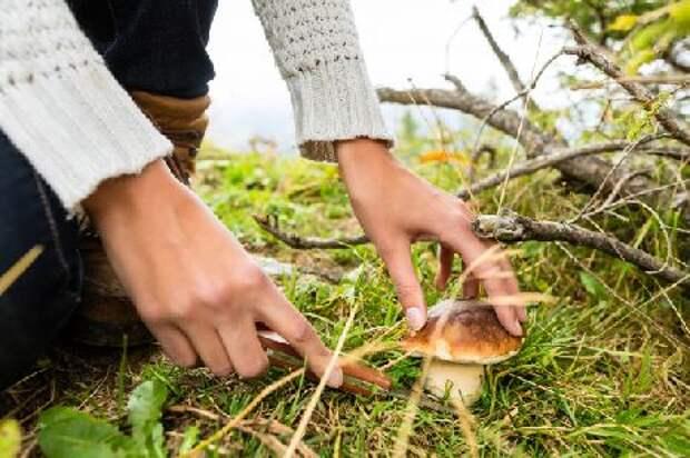 В России ужесточили правила сбора грибов, ягод и берёзового сока