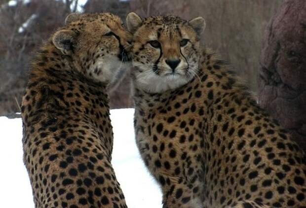 Проявление чувств в мире животных: умилительные поводы для улыбки