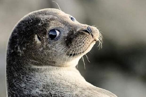 На берегу Каспия в Дагестане снова были обнаружены погибшие тюлени