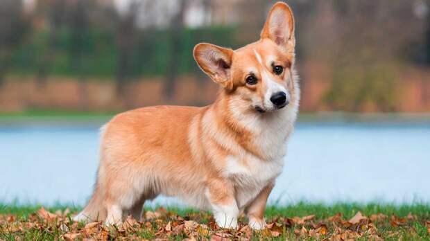 Собаки как антидепрессанты: 7 пород, помогающие справиться с тревогой