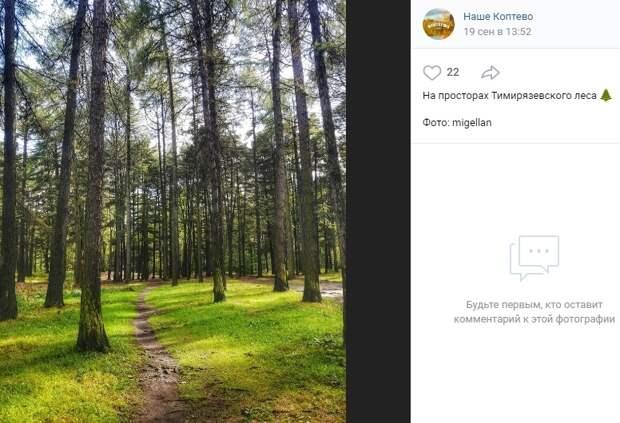 Фото дня: осенний Тимирязевский лес