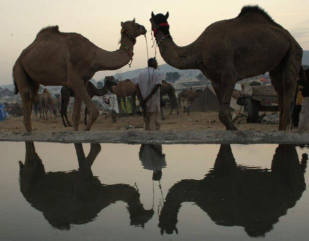Фото №2 - 5 популярных заблуждений о животных, в которые все верят