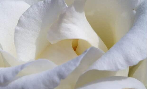 """В конце сентября в Крыму пройдёт акция """"Белый цветок"""" в помощь детям с особенностями развития"""