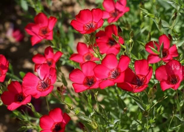 Какие цветы посадить на даче, чтобы цвели все лето? :: Уличн…