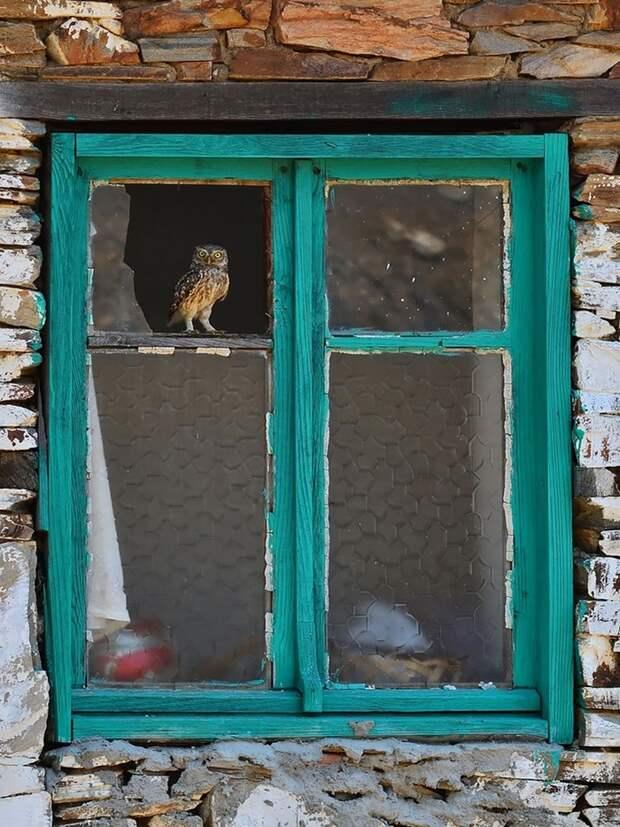 throughwindow05 Нечеловеческое любопытство: что видят в окнах животные
