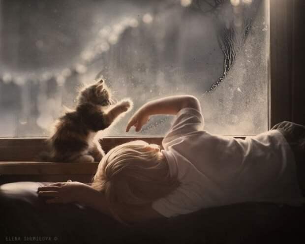 О дружбе детей и котов (20 фото)