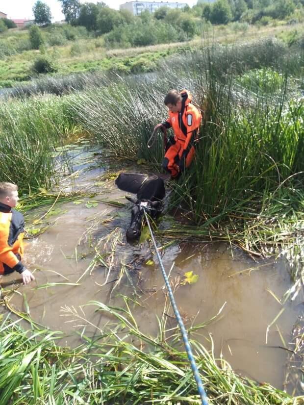 Волонтеры «Кошкиспас» спасли из реки беременную корову. Но на следующий день ее отправили на скотобойню