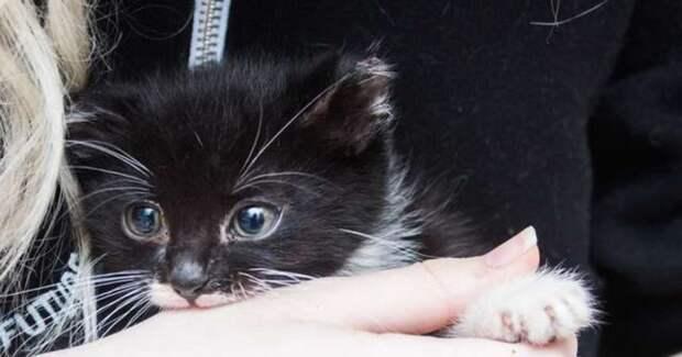 Мужчина нёс коробку, а внутри колотилось от страха маленькое сердечко… Это котенок ждал своей участи