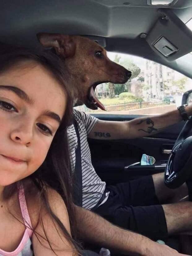 Собака боится ездить в машине