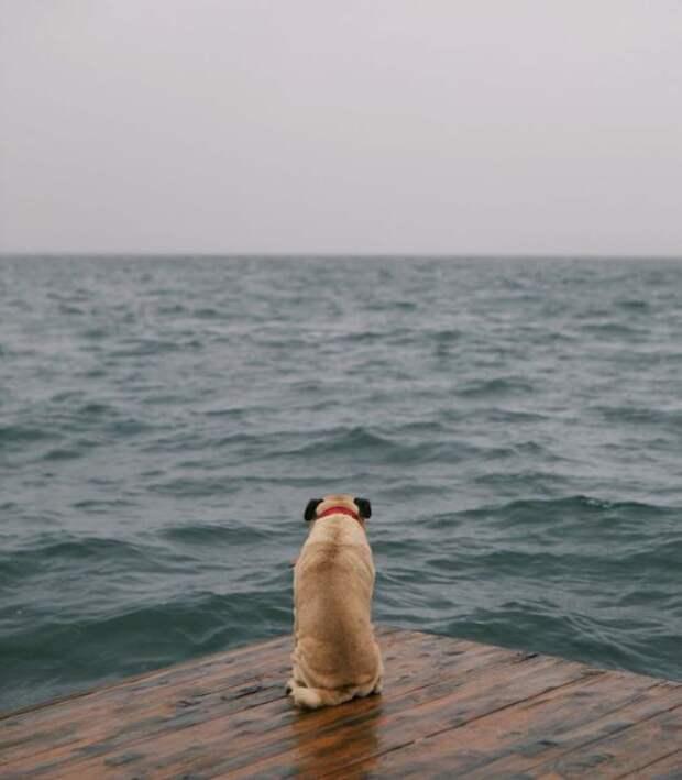 Изумрудные волны завораживают взгляд.