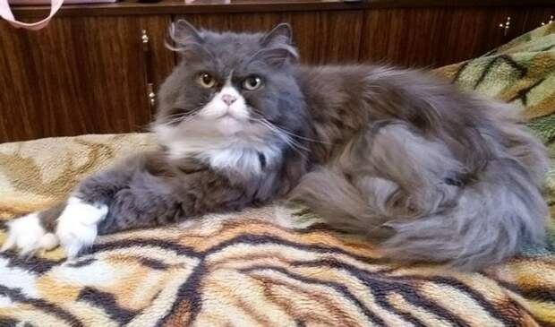 20 кошачьих полукровок, которые вызывают зависть даже у их чистокровных родителей