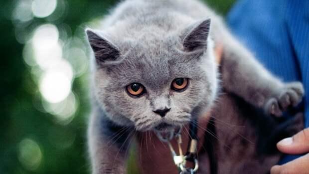 Названы способы определить отношение кошки к ее хозяину