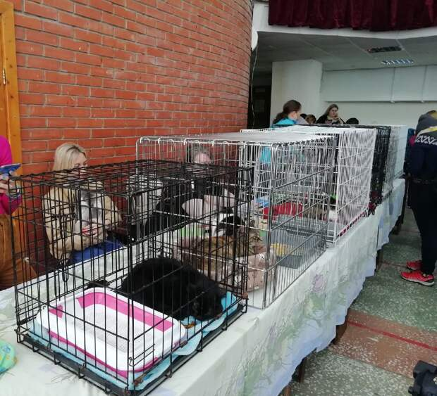 У 23 животных появилась семья благодаря «Пушистому фестивалю» в Ижевске