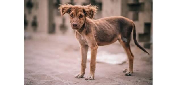 Т666,5 млн просят на пять лет на отлов и уничтожение бродячих собак и кошек в Нур-Султане