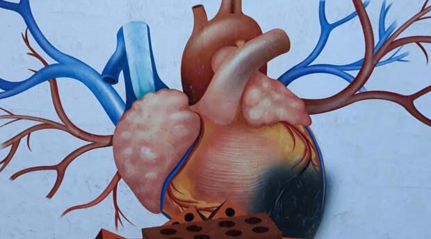 Ученые рассказали о веществе необходимом для нормальной работы сердца