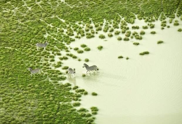 Первозданная красота Африки на удивительных аэрофотографиях