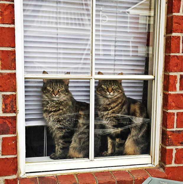 throughwindow13 Нечеловеческое любопытство: что видят в окнах животные