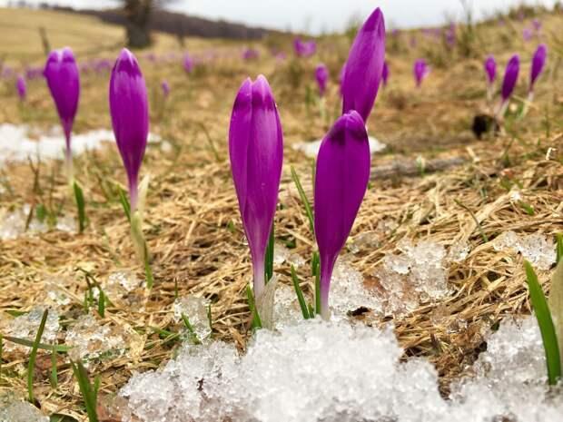 Днем в Удмуртии потеплеет до +10 градусов