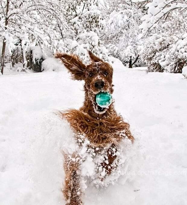 Собаки на снегу