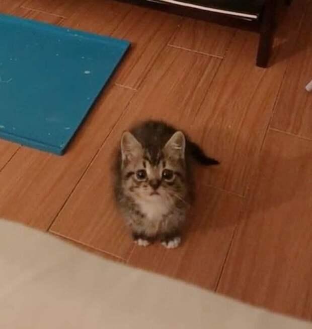 Котёнок пробрался в дом через подвал и выбрал очень правильную квартиру…