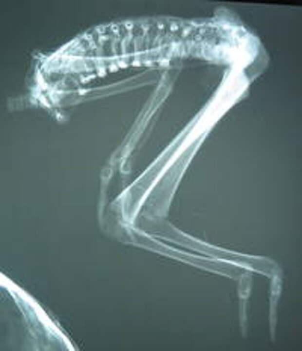 Виктория. Рентгенограмма