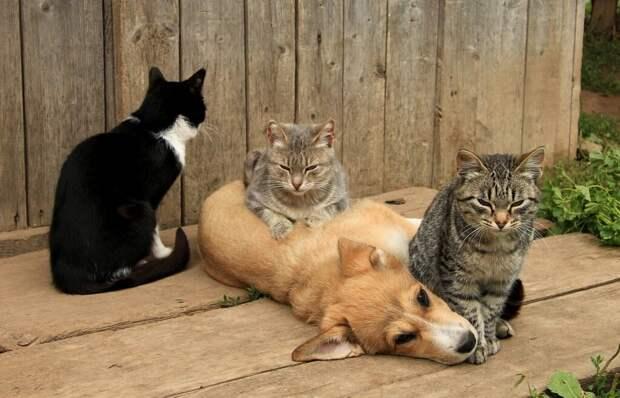 Кошкособ. Барбос, которого воспитали кошки